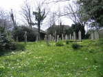 Dissenters General Cemetery and Chapel Primroses in spring