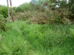 Area above lower bog cleared 2011 showing natural regrowth 2012